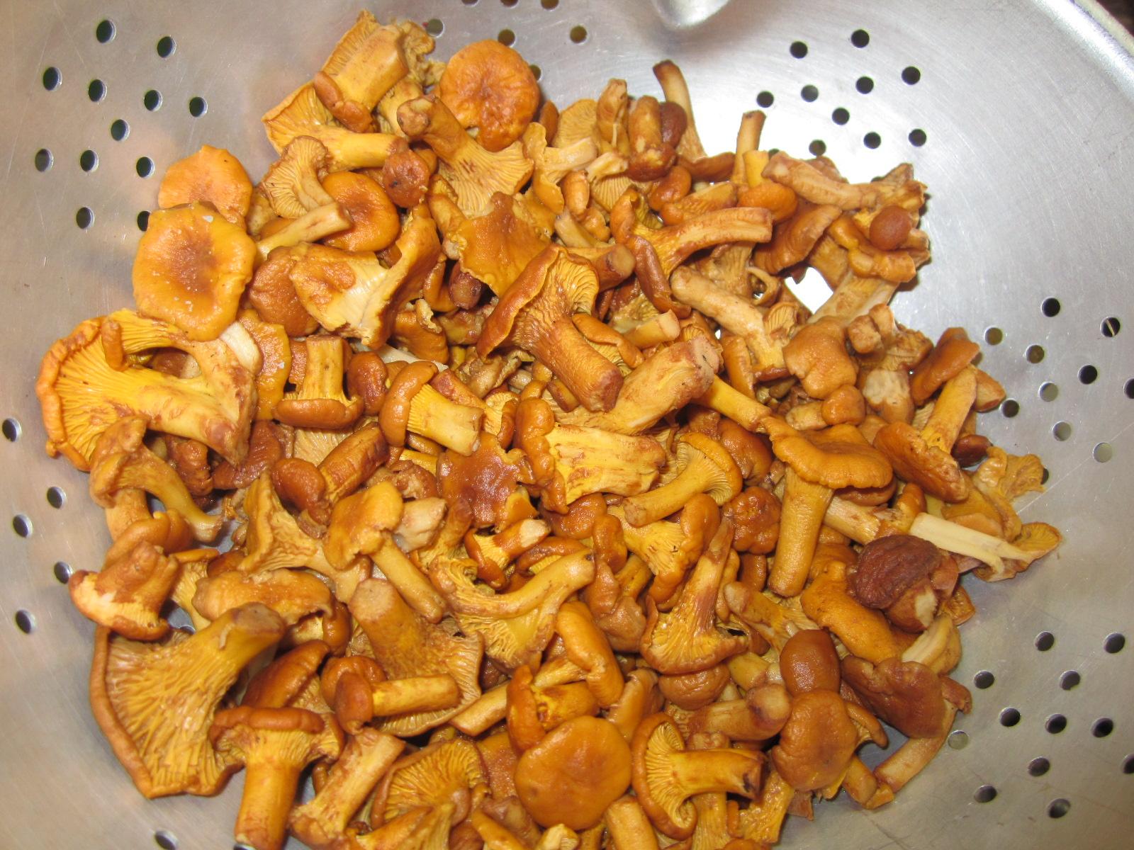 Грибы с луком и сметаной жареные рецепт пошагово в